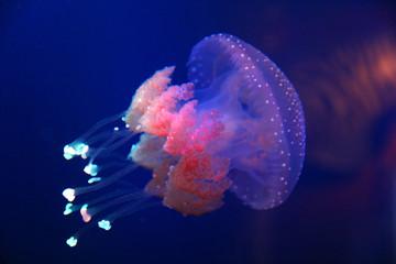 Barrel jellyfish Wall mural