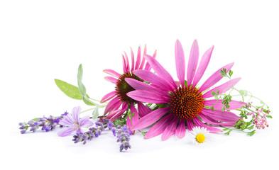 Alternativmedizin - Freisteller -  Echium, Lavendel, Malve, Salbei, Erdrauch