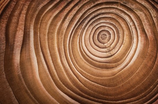 Wood larch texture of cut tree trunk, close-up.