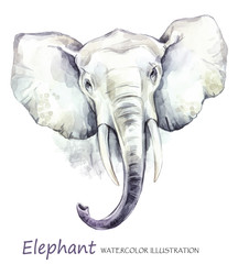 Watercolor elephant on the white background. African animal. Wildlife art illustration. Can be printed on T-shirts, bags, posters, invitations, cards, phone cases, pillows.