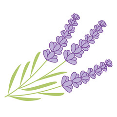 Vector Lavender Bunch
