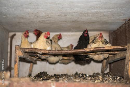 the hen house allpeoplequiltcom - 550×367