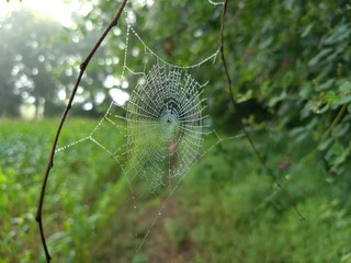 Silky web with morning dew