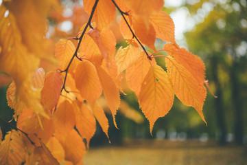 Orange leaves against defocused background