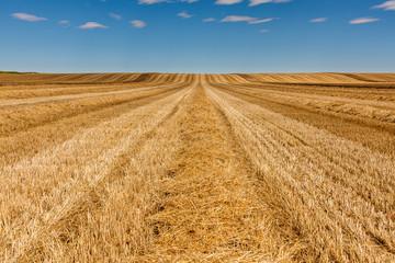 Campo de trigo cosechado. León, España.