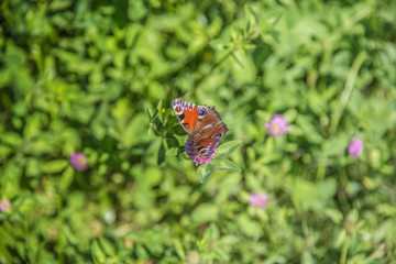 Beautiful butterfly sits on a flower in sunny summer weather