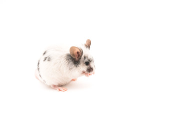Decorative cute mouse isolated on white background