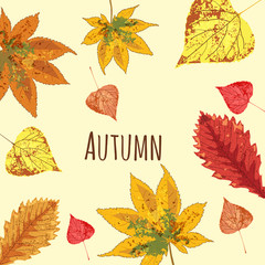 Autumn leaves falling beautiful, set, isolated, vector, illustration