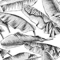 Seamless pattern with image of a Banana leaves. Vector black and white illustration.