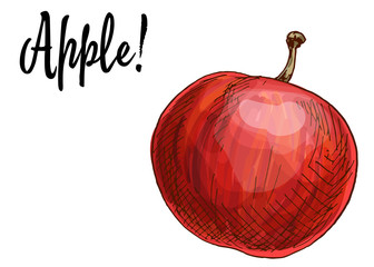 Ripe delicious red apples isolated on white background. Vector Illustration