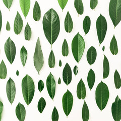 Creative floral pattern made of tropical green leaves on white background. Flat lay. Top view