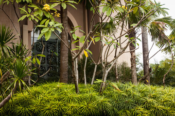 a beautifull green garden park in front of buidling photo taken in jogja yogyakarta indonesia