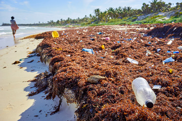 Environmental pollution at idyllic beach concept picture / Garbage at caribbean beach nearby Cancun in Mexico