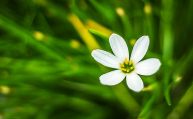Close up of a white flower with green background