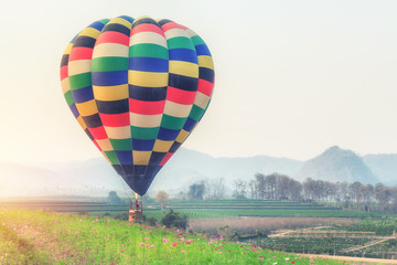 Poster Ballon Hot air balloon over flower fields against blue sky
