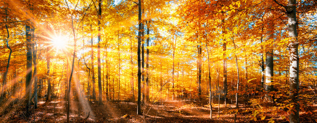 Photo sur cadre textile Orange Wald Panorama im goldenen Herbst
