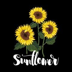 Sunflowers vector hand drawn. Inscription. Vector illustration.