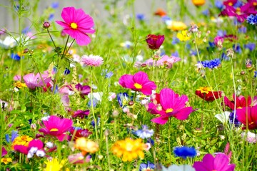 Grußkarte - bunte Blumenwiese - Sommerblumen