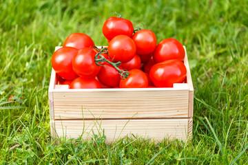 Fresh tomatoes lie in box