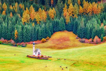Wall Mural - St Johann Church, Santa Maddalena, Val Di Funes, Dolomites, Italy. Beautiful view of idyllic autumn forest with baroque Church of St. Johann of Nepomuk on a sunny day in the Dolomites, South Tyrol.