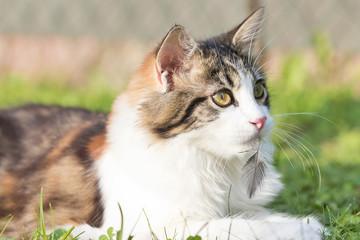 Haustiere - Katze ein Jäger: Gefahr für Vögel