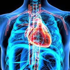 3d render of human heart