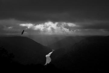 Buzzard flying in gorge