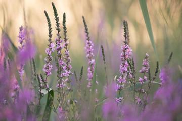 Wild Flowers At Dusk