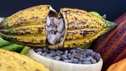 Kakaofrucht und Kakaobohnen organic