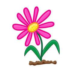 flower isolated illustration on white background