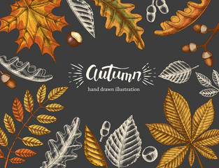 Background with hand drawn autumn doodle and colored yellowed leaves and hand made lettering. Engraving illustration. Banner, flyer, brochure, poster, web. Advertising