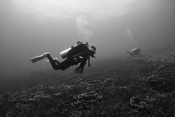 Scuba divers explore a coral reef,Black and white photo