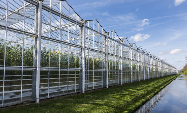 Tomato Greenhouse Harmelen with Ditch