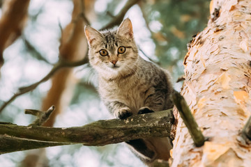 Funny Cat Sitting On A Pine Tree Branch In Summer Forest Park