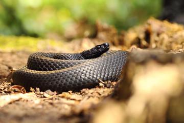 black snake on forest ground