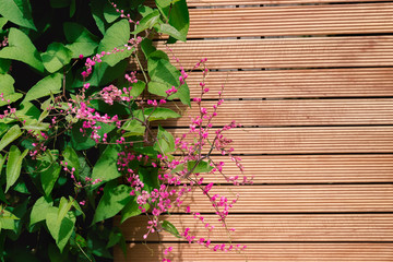 Mexican Creeper pink flower on wooden background, with copy space