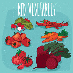 Set of isolated food products, plants and fruits, such as radish, hot pepper, bell pepper, carrot, tomato, beet. Realistic hand draw style. Lettering Red vegetables