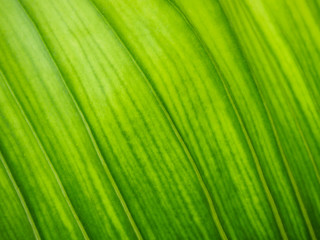 blur green leaf texture background , nature background
