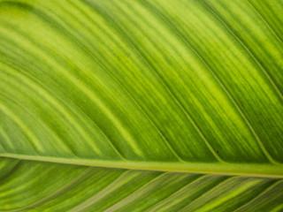 blur green leaf texture background , nature background