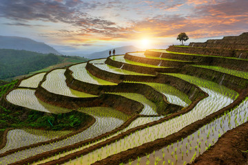 Printed roller blinds Rice fields Rice terrace rice field of Thailand, Pa-pong-peang rice terrace north Thailand,Thailand landscape,Thailand