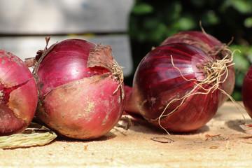 Rote Gemüsezwiebeln