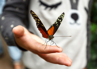 Butterfly on Child's hand