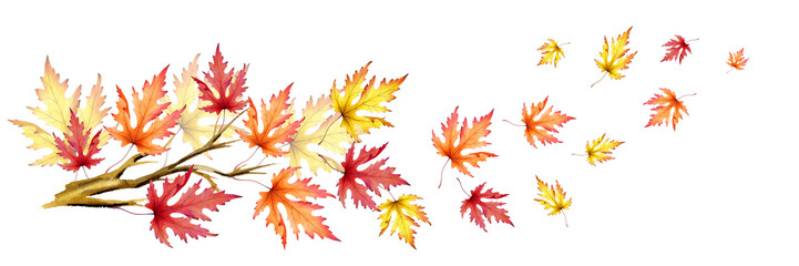Branch with colorful maple leaves. Autumn wind. Hand-drawn watercolor illustration