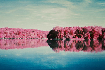 Pink trees across the water