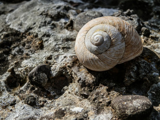 Beautiful sea snail shell on rock