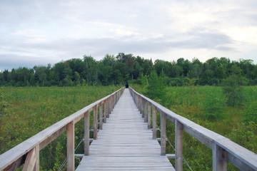 wood path bridge boardwalk green swamp landscape environment