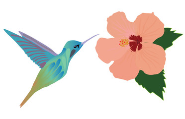 Vector hummingbird flower