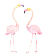Exotic bird. Watercolor couple flamingo. Hand drawn illustration