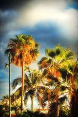 palm tree beach background