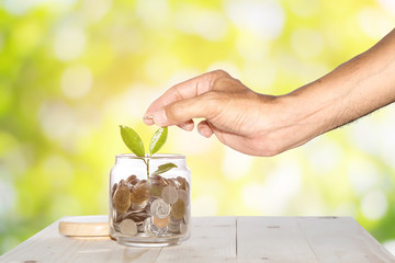 Man's hands are putting a coin into a glass jar with a small tree placed on a wooden table with a green bokeh background, Concepts for business and finance.